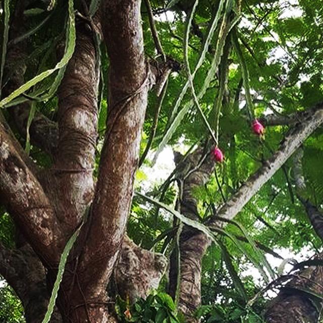 DF Trees